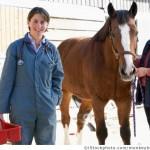 Beruf mit Pferden